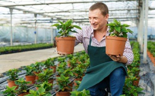 environmental horticulture jobs